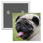 Pug dog cute photo button, pin