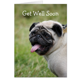 Pug dog get well soon greeting card cute photo