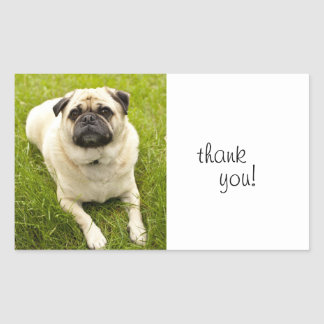 Pug dog happy thank you beautiful photo stickers