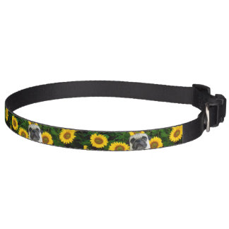 Pug dog in sunflowers pet collar