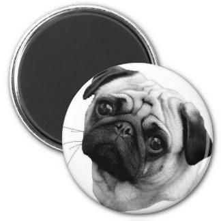Pug Dog Magnet