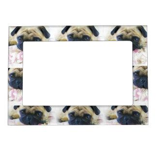 Pug Dog Magnetic Picture Frame