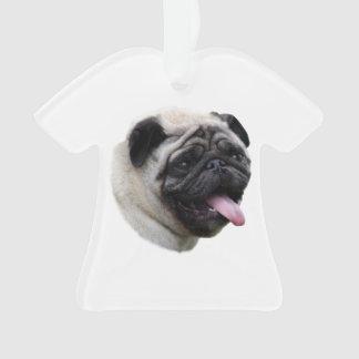 Pug dog pet photo portrait