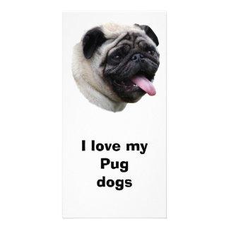 Pug dog pet photo portrait card