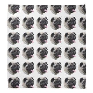 Pug dog pet photo portrait bandana