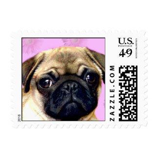 Pug dog postage stamp