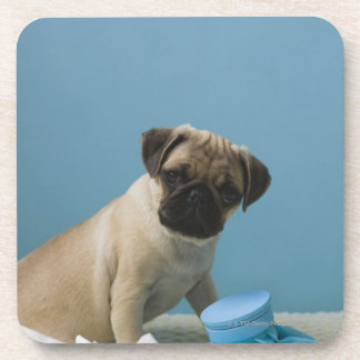 Pug dog sitting on bed by hot water bottle and drink coaster