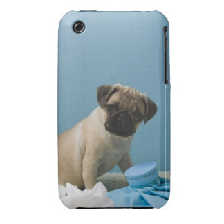 Pug dog sitting on bed by hot water bottle and iPhone 3 covers