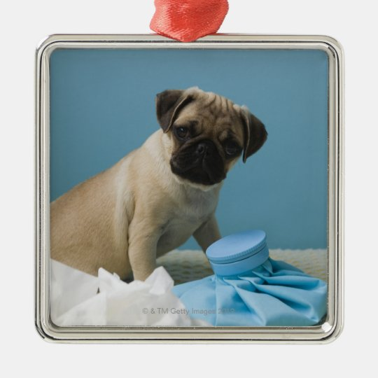 Pug dog sitting on bed by hot water bottle and metal ornament