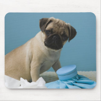 Pug dog sitting on bed by hot water bottle and mouse pad