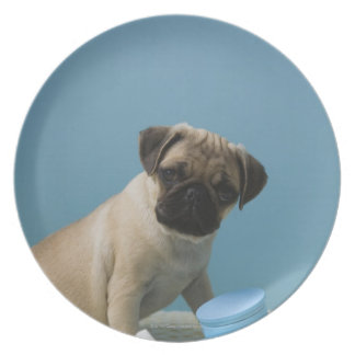 Pug dog sitting on bed by hot water bottle and plates