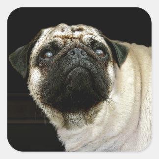 Pug Dog & Spilled Mug Pet-lover Stickers