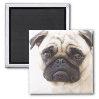 Pug Dog Square Magnet Fridge Magnet