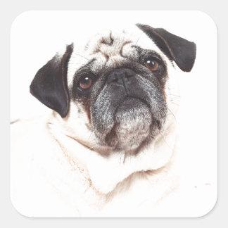 Pug face square sticker