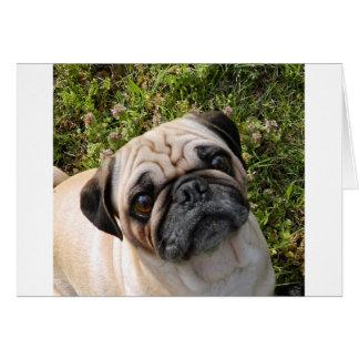 pug fawn card