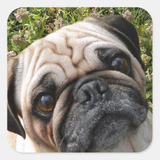 pug fawn square sticker