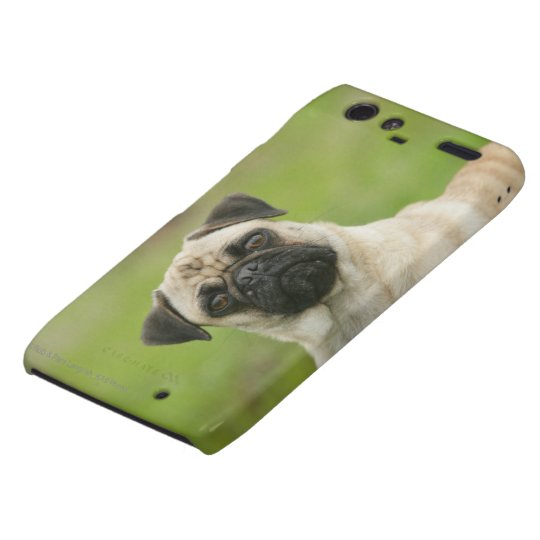 Pug Head Cocked Looking at Camera Droid RAZR Cover