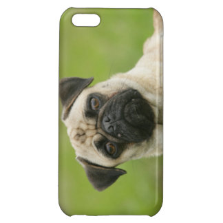 Pug Head Cocked Looking at Camera iPhone 5C Cover