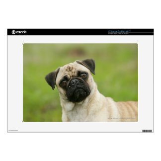 "Pug Head Cocked Looking at Camera Decals For 15"" Laptops"