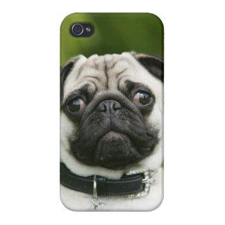 Pug headshot case for iPhone 4