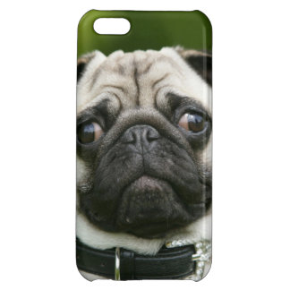 Pug headshot iPhone 5C cases