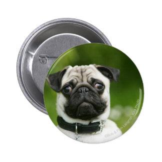 Pug headshot pinback button