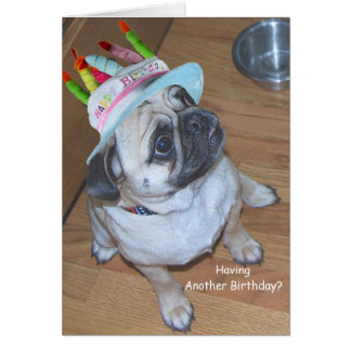 Pug In A Birthday Hat Greeting Cards