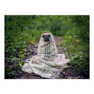 Pug in a Blanket Poster