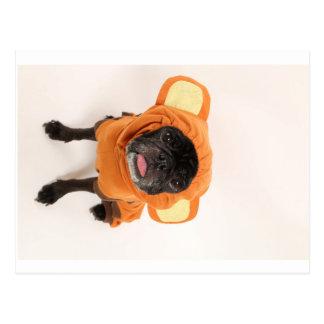 pug in monkey costume postcard
