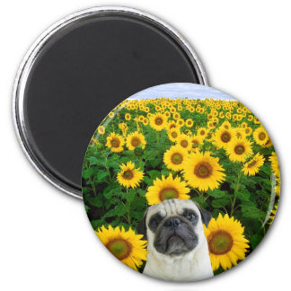 Pug in Sunflowers magnet