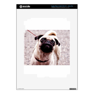 Pug iPad 3 Skin