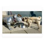 Pug kisses postcard