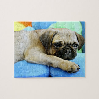 Pug laying on pillows jigsaw puzzle