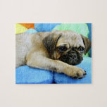 Pug laying on pillows jigsaw puzzles