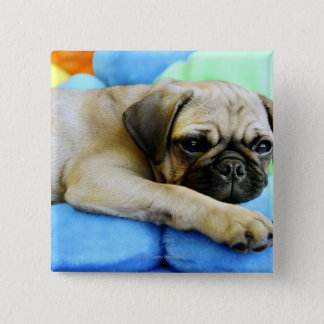 Pug laying on pillows pinback button