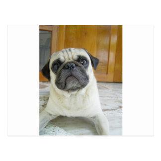 pug laying.png postcard