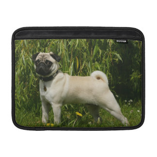 Pug Lookign at Camera MacBook Sleeve