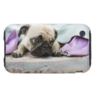Pug looking innocent after chewing the toe off iPhone 3 tough case