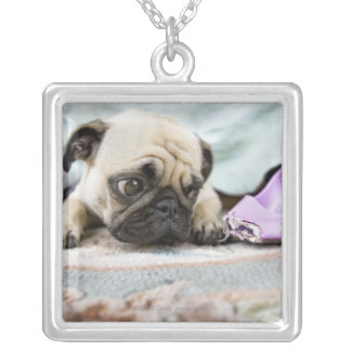 Pug looking innocent after chewing the toe off pendant