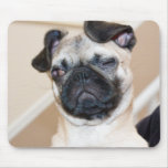 Pug looking with one eye closed mouse pad
