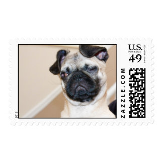 Pug looking with one eye closed postage stamp