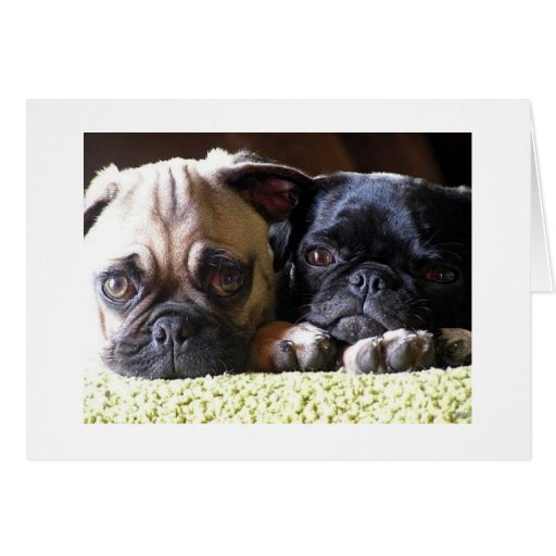 Pug Love Note Cards