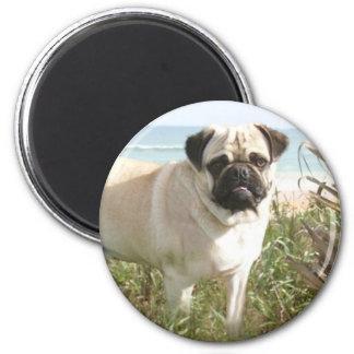 Pug Magnet Beachgrass