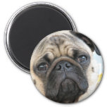 Pug Me 2 Inch Round Magnet