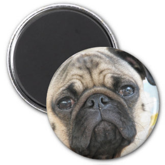 Pug Me Magnet