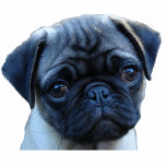 """Pug Mug Photo Sculpture Magnet<br><div class=""""desc"""">Put this little puggy on the job!  This is a great addition to anyone&#39;s refrigerator magnet collection.</div>"""
