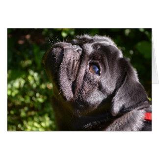 Pug Noir Chin up Card