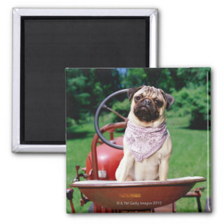 Pug on lawnmower wearing bandana 2 inch square magnet