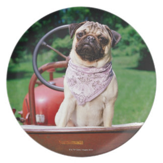 Pug on lawnmower wearing bandana dinner plate