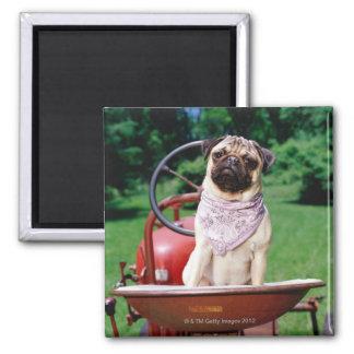 Pug on lawnmower wearing bandana magnet